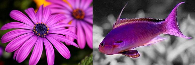 Purple Flowers and Purple Fish