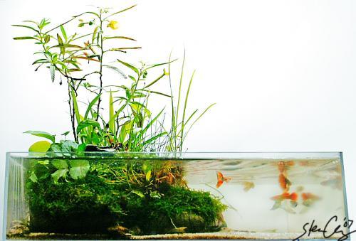 Wabi-Kusa Aquascape