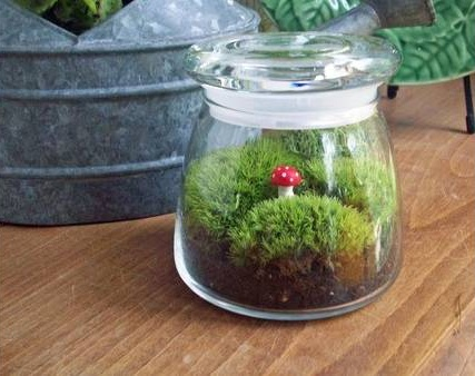 Terrarium with Figurine
