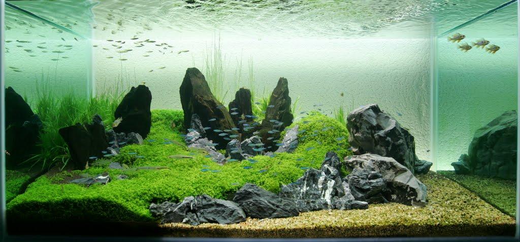 Go zen with an iwagumi aquarium rock garden fpsbutest for Zen fish tank