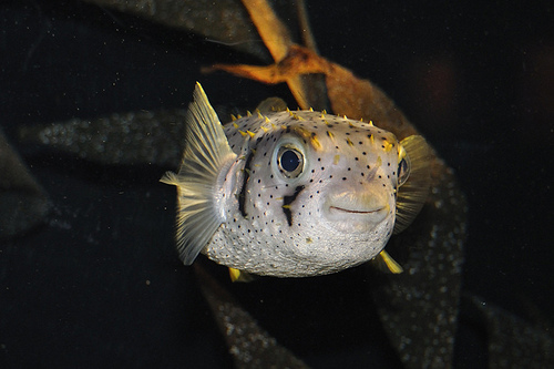 Fish with Personality