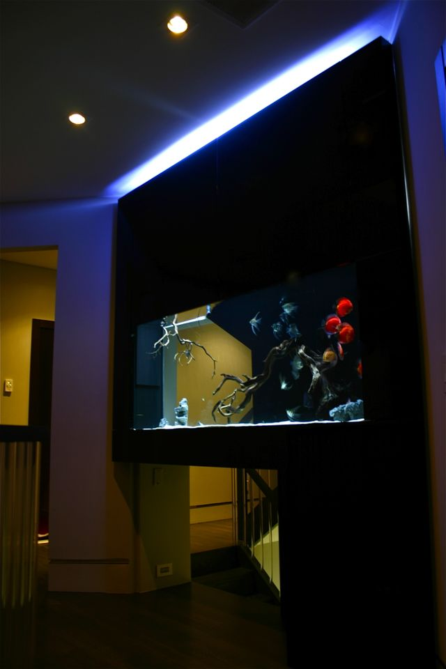 Custom Home Aquarium in Hallway