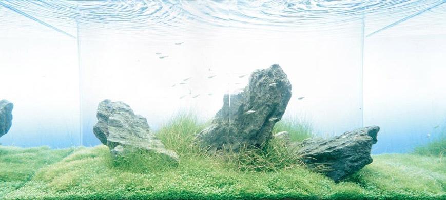 Japanese Sanzon Iwagumi Aquarium