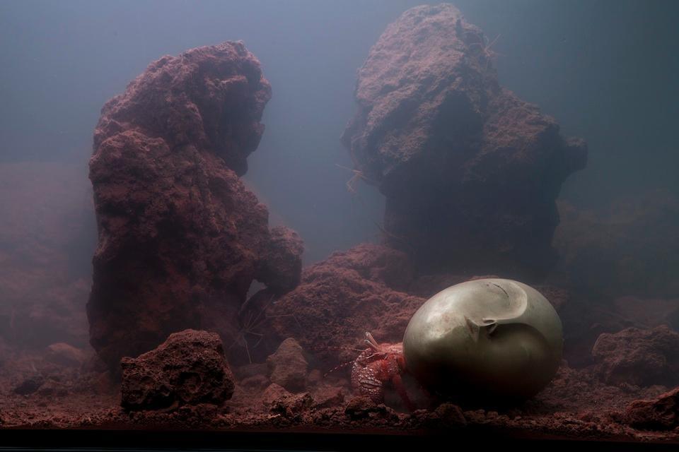 Pierre Huyghe's Artistic Aquarium