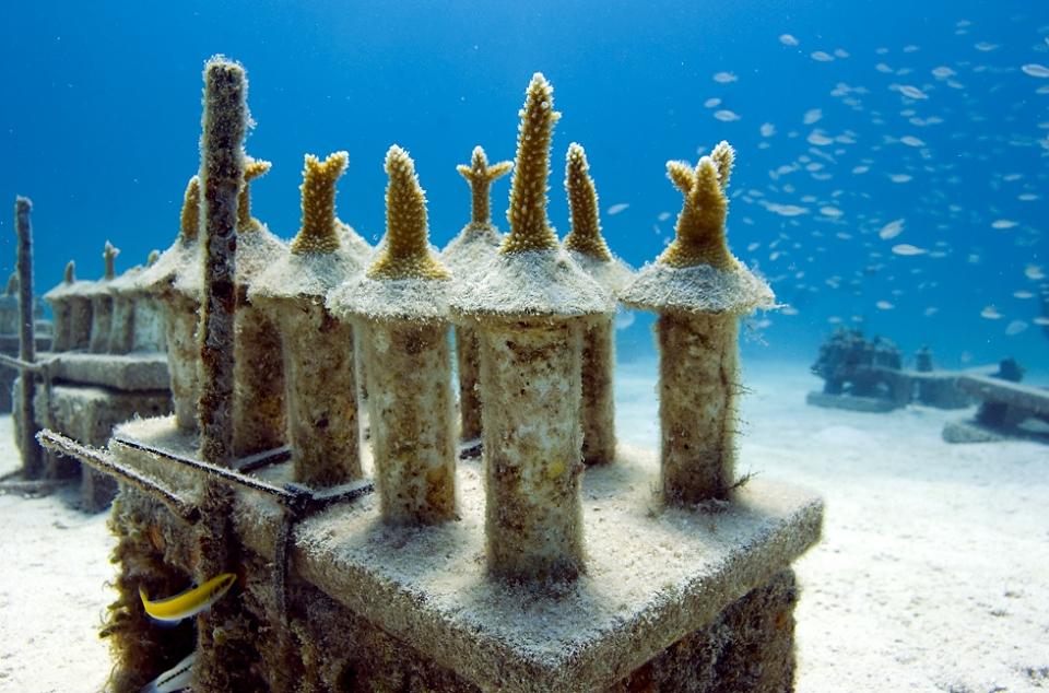 Coral Reef Nursery