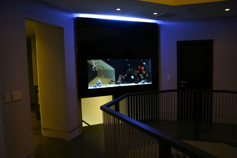 Custom Aquarium in Home Stairwell