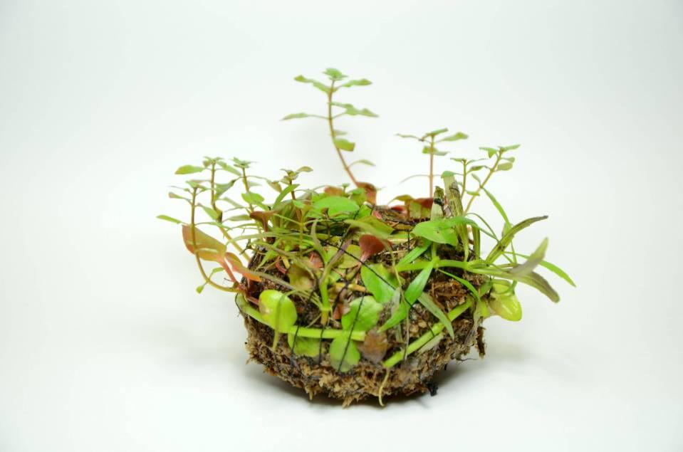 Wabi-Kusa Plant Ball