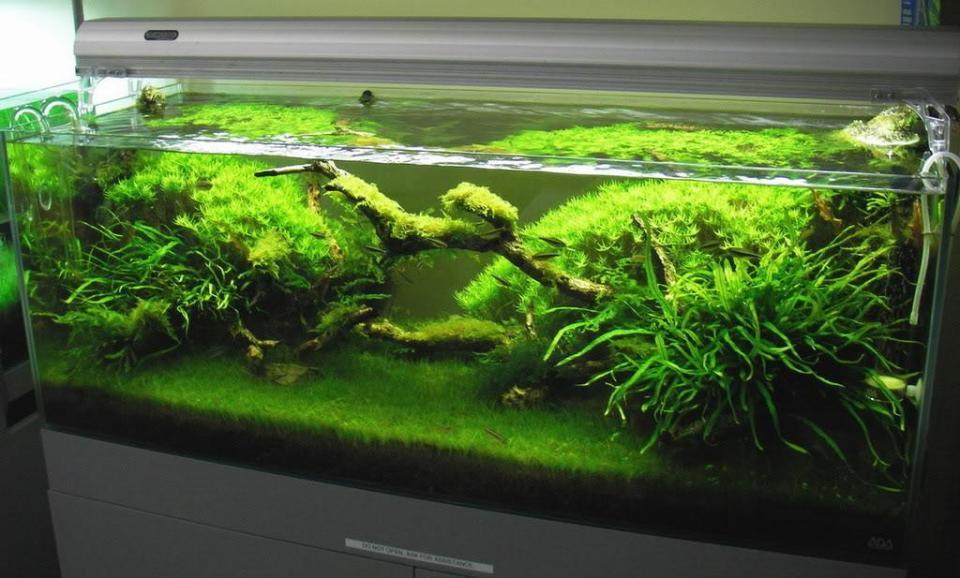Green Freshwater Aquarium