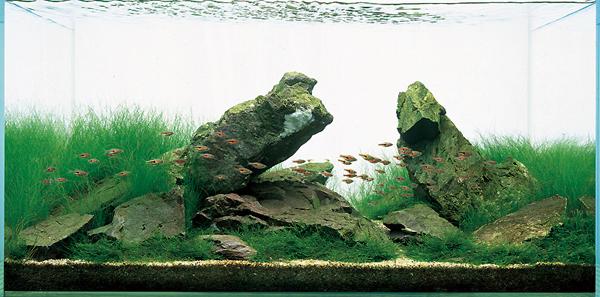 Iwagumi Style Planted Aquarium