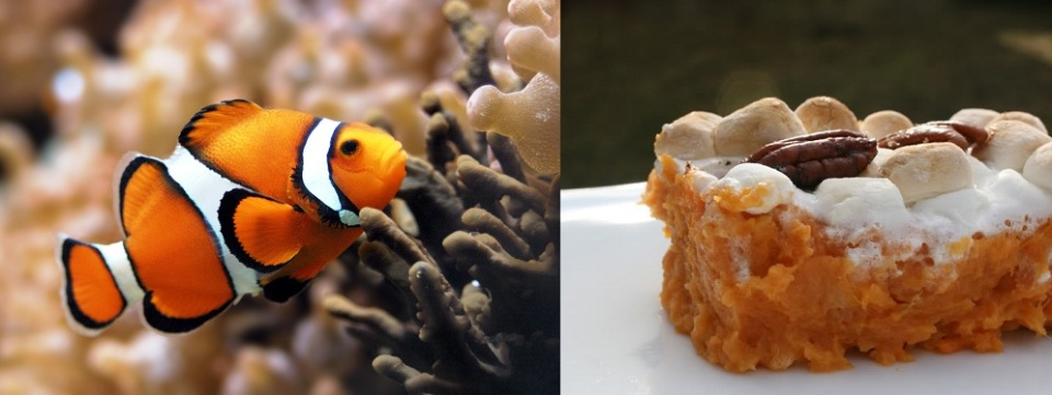 Sweet Potato Casserole and Clownfish for Saltwater Aquariums