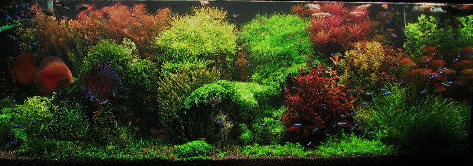 """Enchanted Garden"" Dutch Style Aquarium"