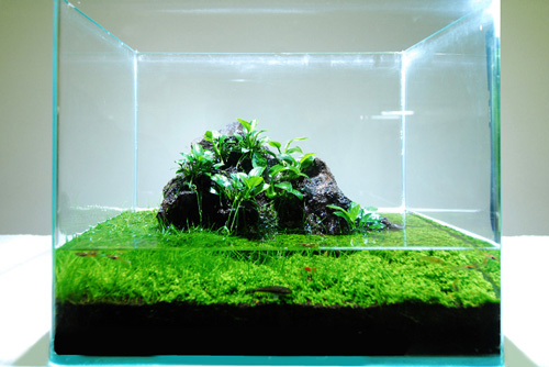 Wabi kusa transforming balls of plants into aquatic art for Indoor gardening diana yakeley