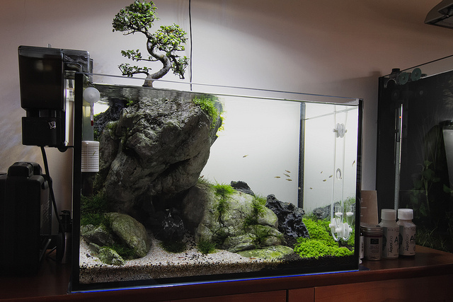 Nature Inspired Aquascape with Bonsai Tree