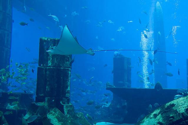 Atlantis Hotel Aquarium