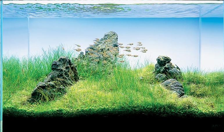 Sanzon Iwagumi Aquarium