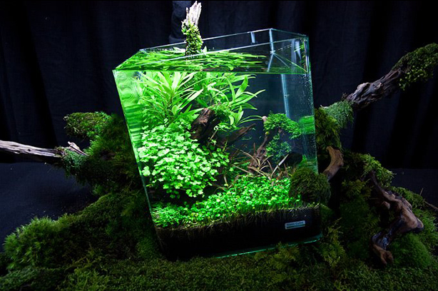 Aquascape on Garden