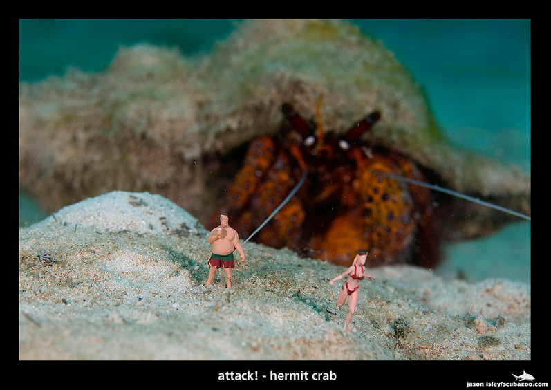 Hermit Crab Attack by David Isley