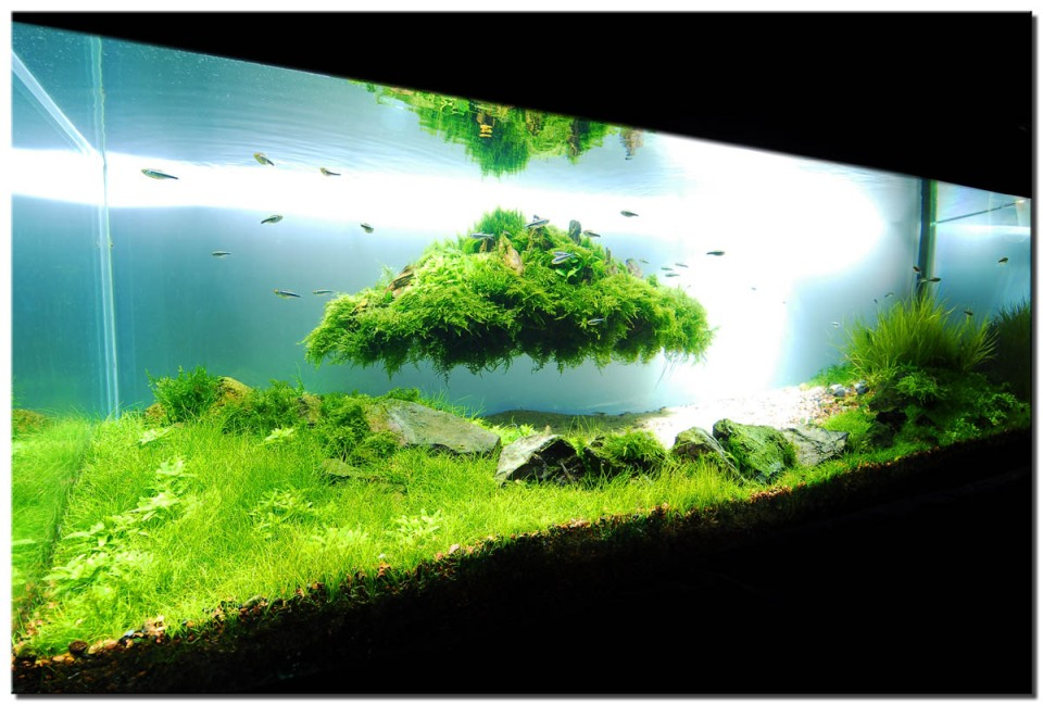 Green Freshwater Home Aquarium