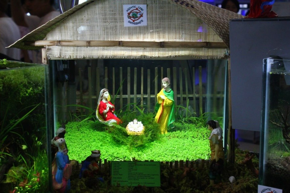 Nativity Scene Aquascape