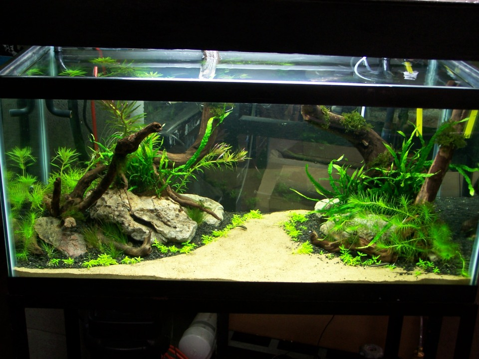 Freshwater Aquascape Stage 1