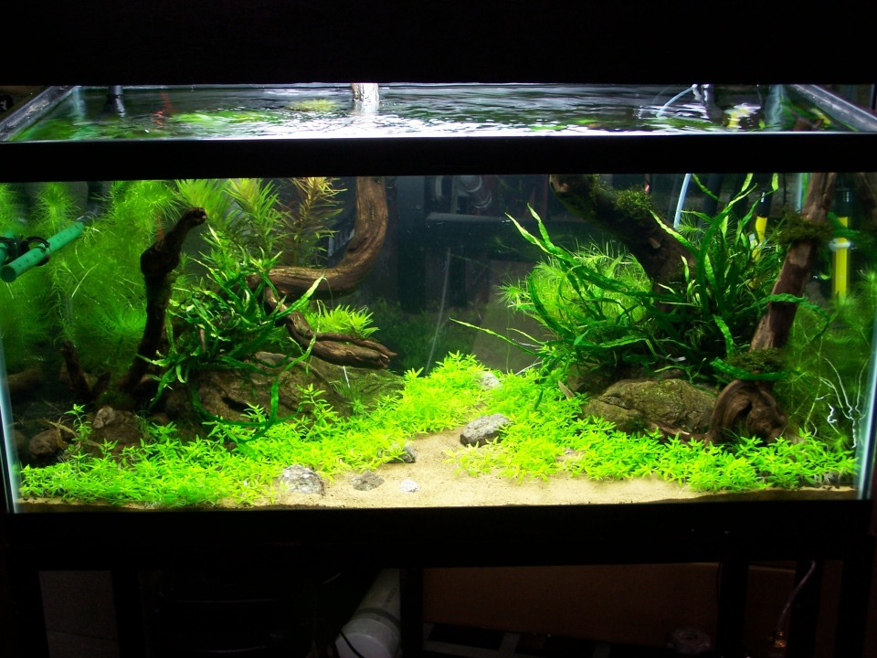 Freshwater Aquascape Stage 3