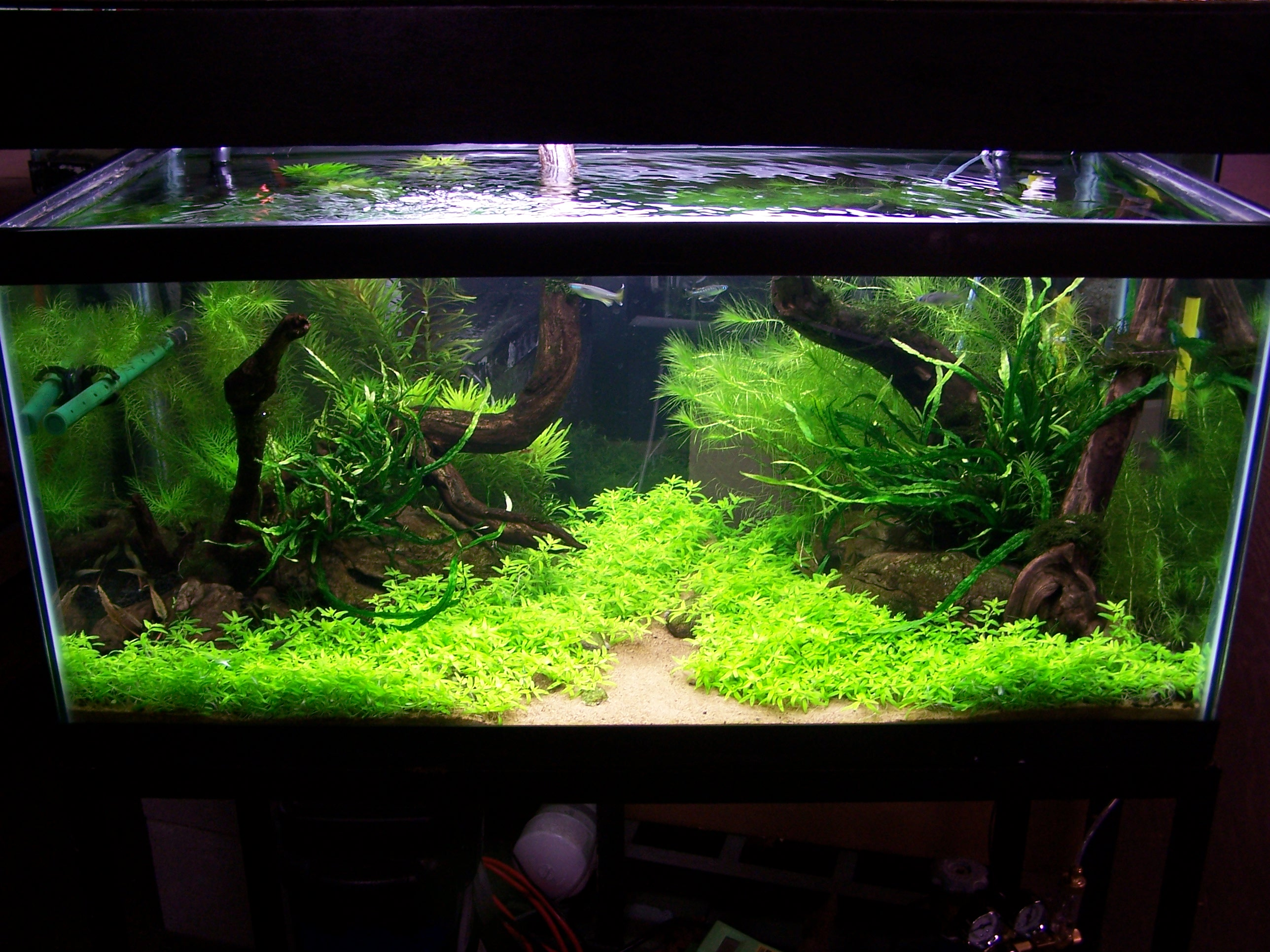 If you build a freshwater aquarium on january 1st when for Aquarium decoration ideas freshwater