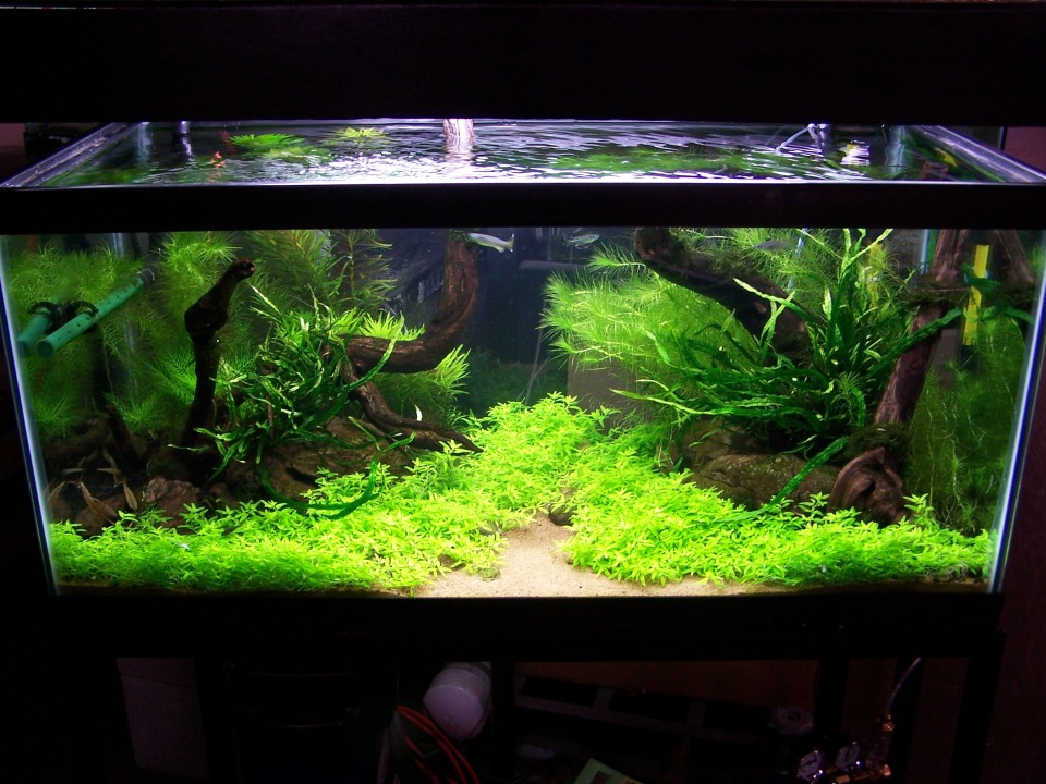 Freshwater Aquascape Stage 4