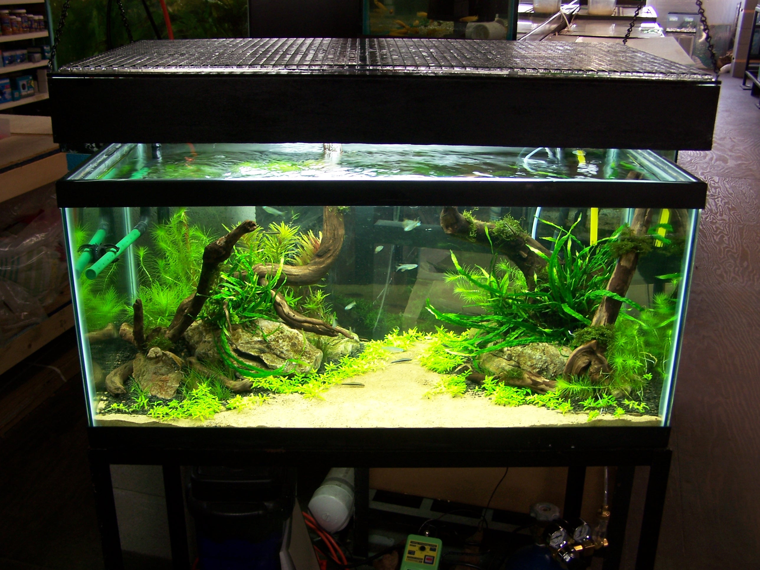 Freshwater Aquascape Stage 2