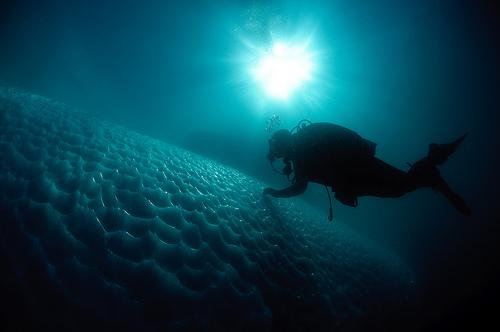 Arctic Diving