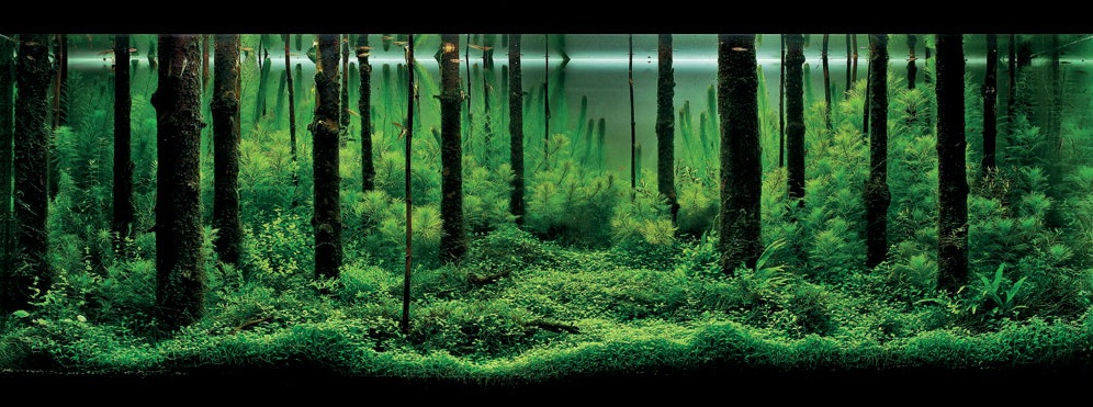 These Custom Aquariums With Underwater Trees Will Blow Your Mind Fpsbutest