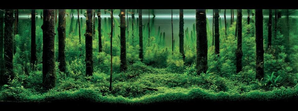 Aquatic Forest Aquascape