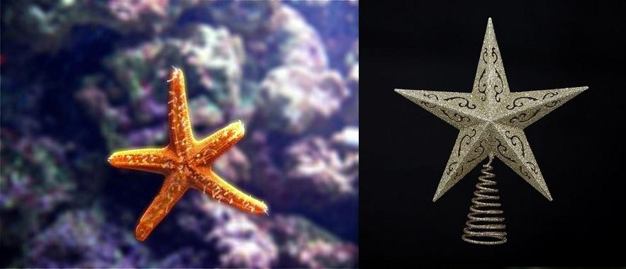 Starfish and Christmas Tree Star