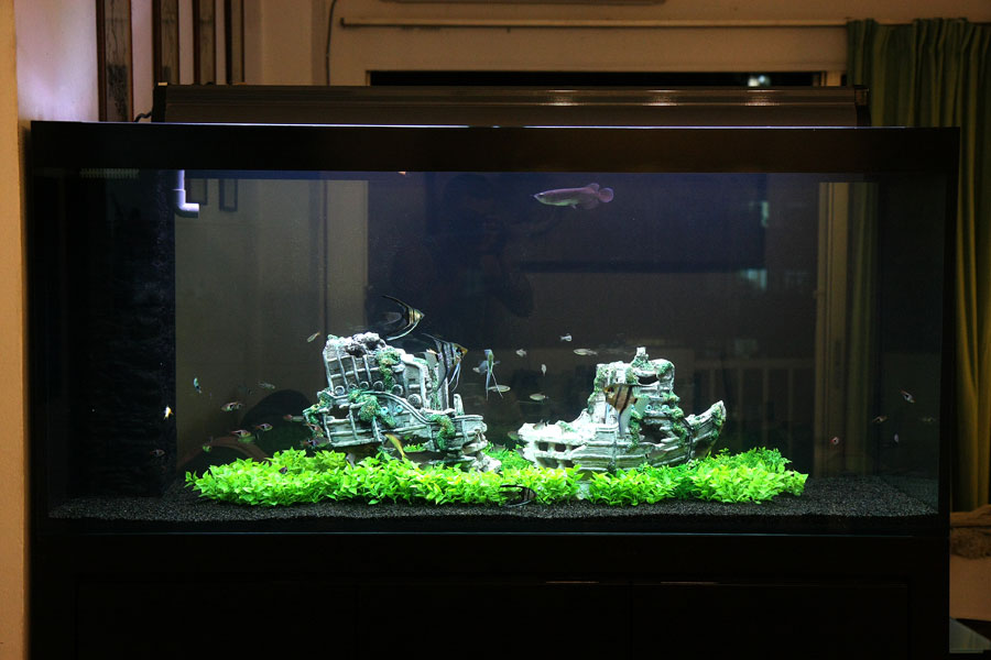 Look for hidden treasure with sunken ship aquascapes for Aquarium decoration ship
