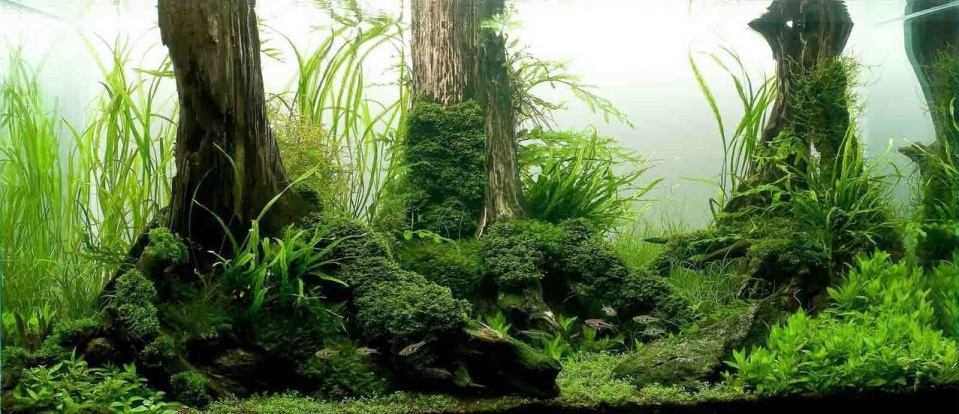 Aquascape with Submerged Tree Roots