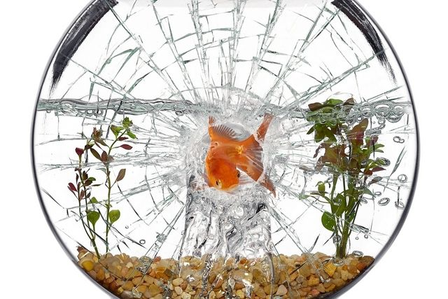 Shattered Fish Aquarium