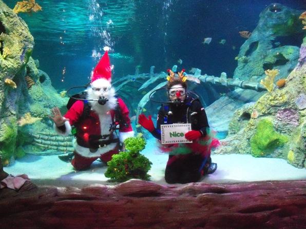 Scuba Santa and Reindeer