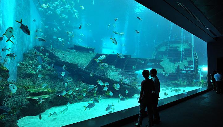 Resort World Sentosa World's Largest Aquarium, the S.E.A. Aquarium
