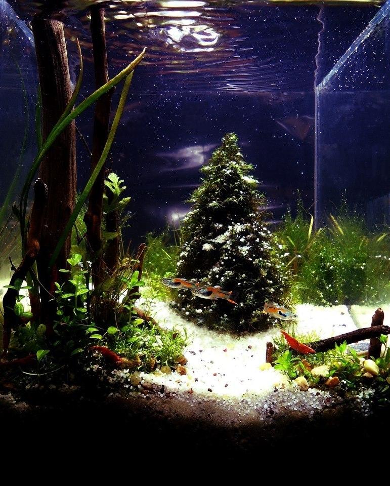 Christmas Aquascape