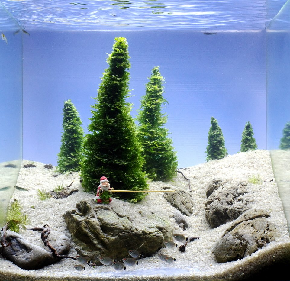 Custom Snow Aquascape