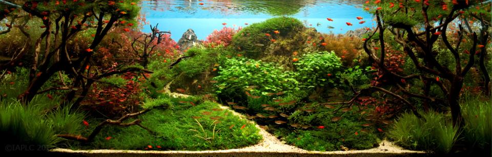 IAPLC Freshwater Aquascape