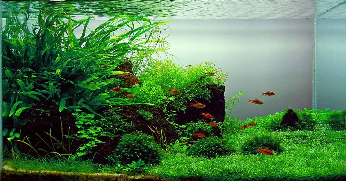 Top 10 Most Beautiful Freshwater Aquariums Of 2012