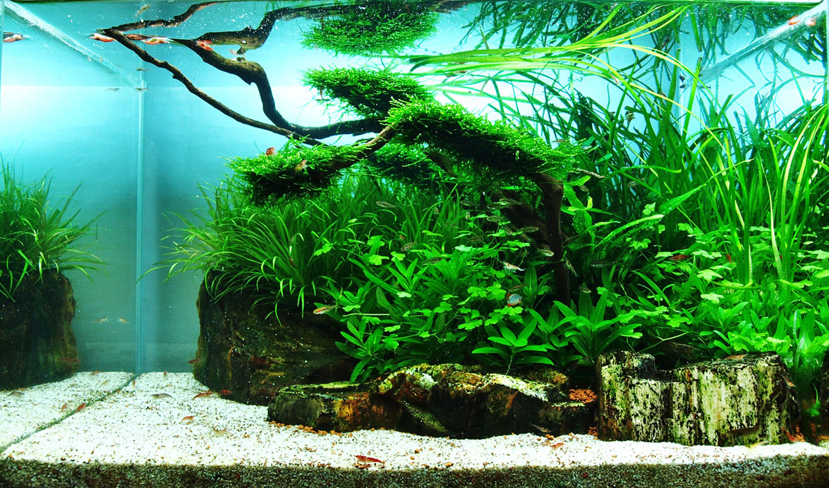 Top 10 Most Beautiful Freshwater Aquariums of 2012 ...
