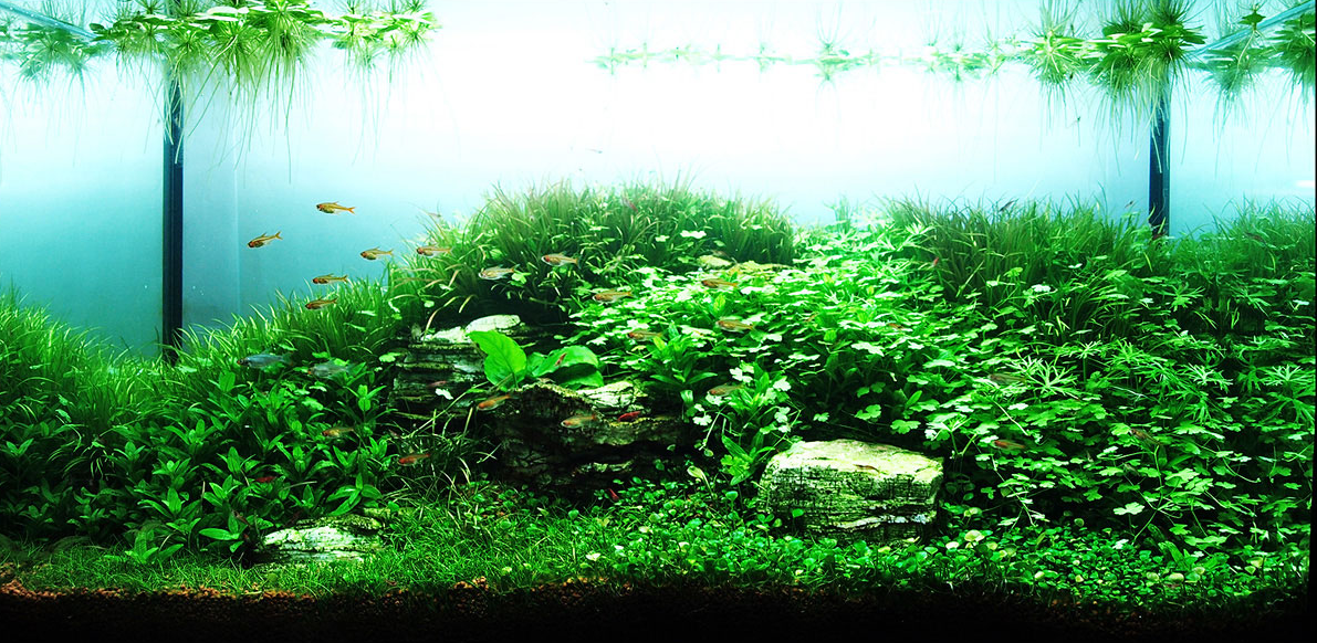 Bright Freshwater Aquascape From The HAC