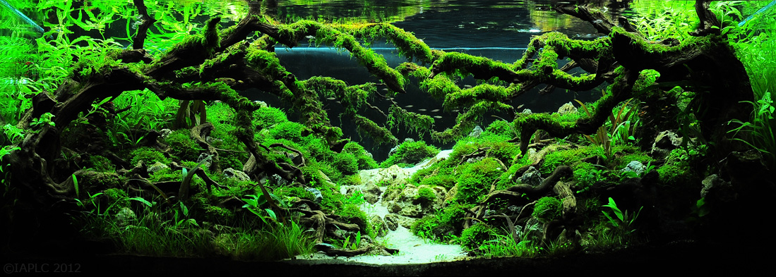 The Top 10 Most Beautiful Freshwater Aquascapes of 2012! fpsbutest