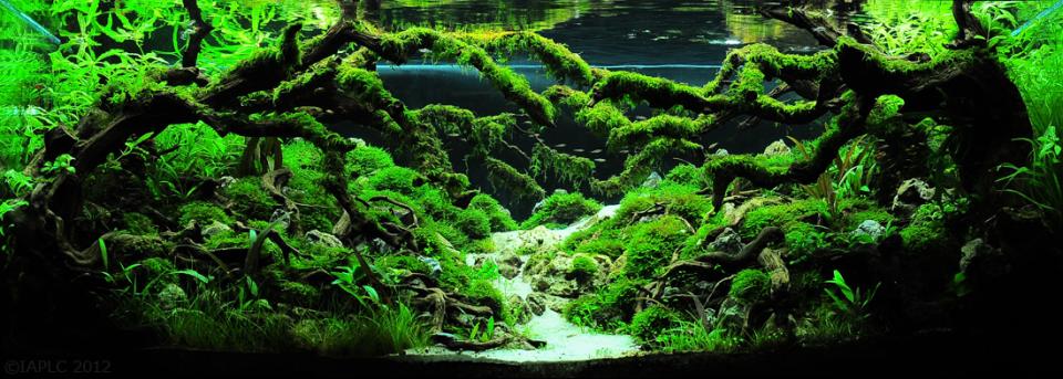 International Aquatic Plants Layout Contest 2012 Aquascape