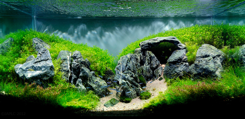 The Top 10 Most Beautiful Freshwater Aquascapes of 2012 ...