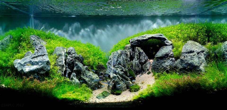 Freshwater Aquascape with Stonehenge Rocks
