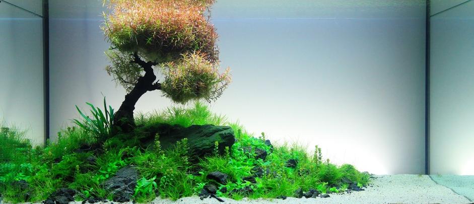 Nature Style Aquarium with Underwater Tree