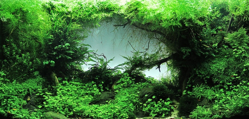 Framed Freshwater Aquascape