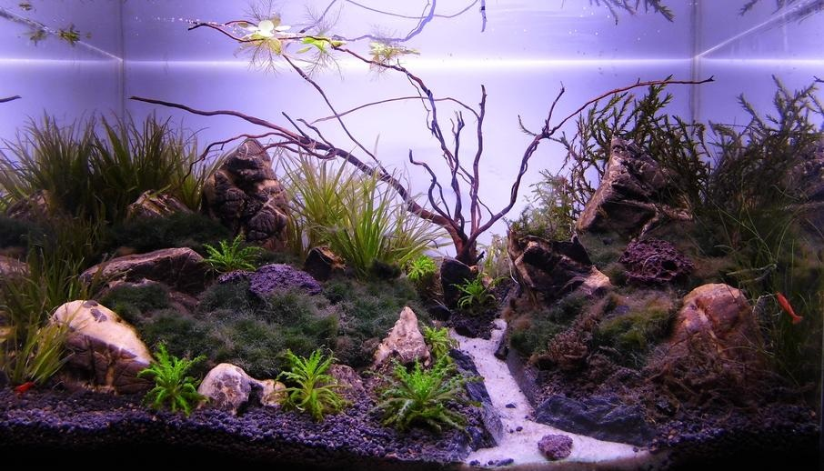 Custom Aquarium with Path of Whtie Sand